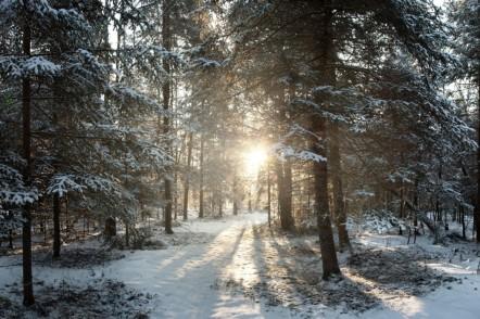 Winter-Woods-1050x700